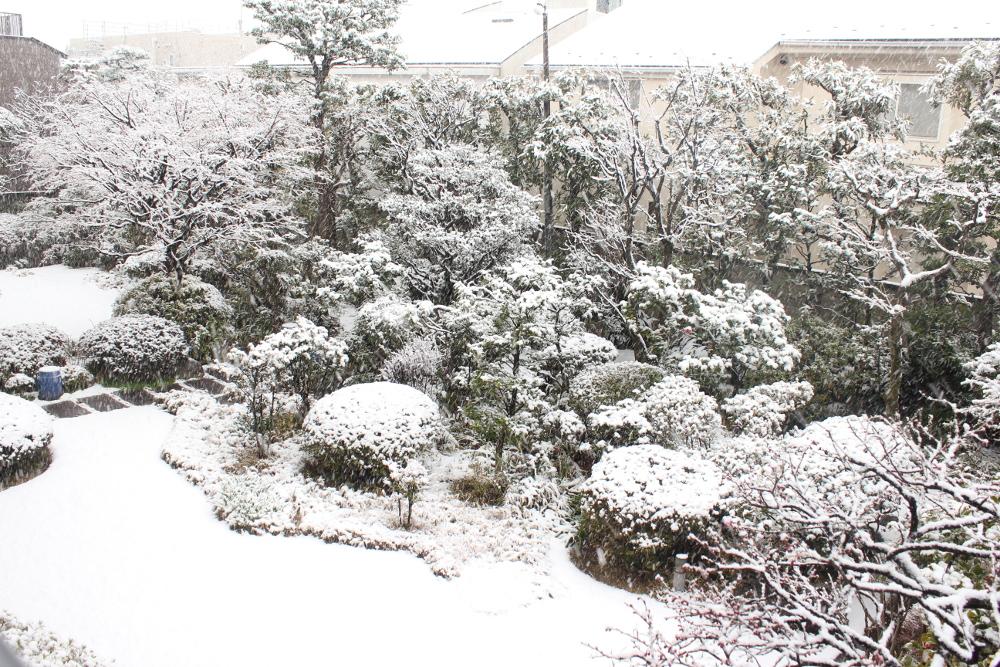 雪 1月22日